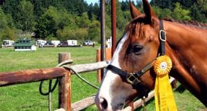 Horse-Safari_Marmaris_4